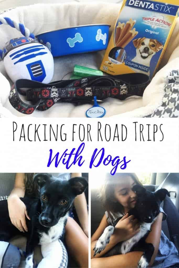 Need a packing list for road trips with dogs? Here are my tips from our cross country road trip with a dog and five kids!