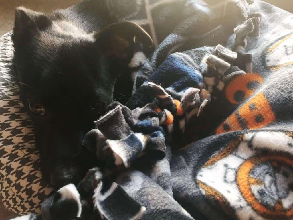 DIY Star Wars Blanket for Dogs