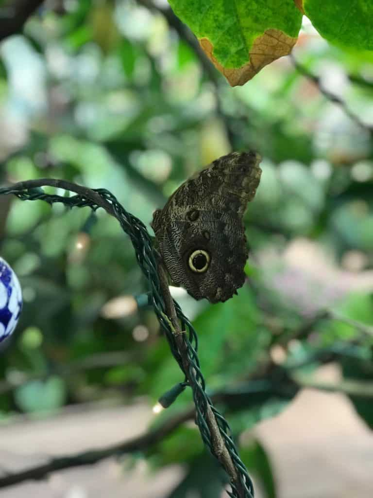 When you visit Hersheypark in the winter, stop by the butterfly atrium at Hershey Gardens.